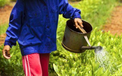 A Gestão da Água é Crítica Para Garantir a Segurança Alimentar
